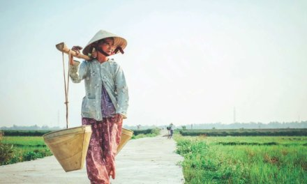 SEALNet Project Vietnam: Food Safety & Organic Farming